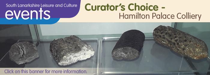Curator's Choice - Hamilton Colliery Fossils