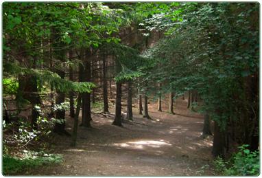 Tours/ trails
